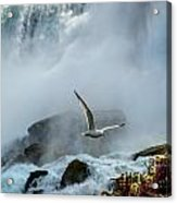 Soaring In The Mist Acrylic Print