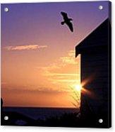 Soaring Sunset Acrylic Print