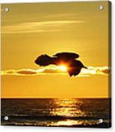 Soaring With Confidence Acrylic Print