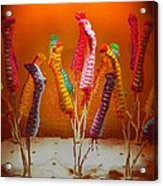 Sock Love Acrylic Print