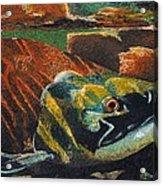 Sockeye Acrylic Print