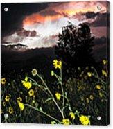 Socorro Sunset Acrylic Print