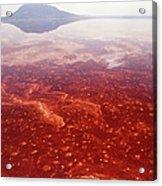 Soda And Algae Formation On Lake Natron Acrylic Print