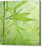 Soft Bamboo Acrylic Print