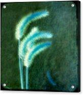 Soft Blue Grass Acrylic Print