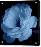 Soft Blue Perfection Acrylic Print