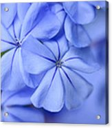 Soft Blue Acrylic Print