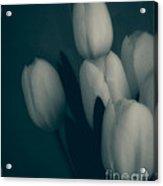 Soft Blue Tulips Acrylic Print
