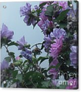 Soft Blues And Pink - Spring Blossoms Acrylic Print