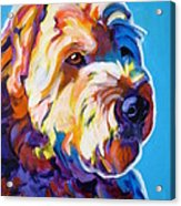 Soft Coated Wheaten Terrier - Max Acrylic Print