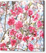 Soft Colors Of Spring Acrylic Print