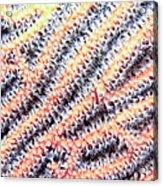 Soft Corals 10 Acrylic Print