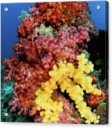 Soft Corals On Reef, Raja Ampat Acrylic Print