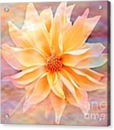 Soft Delightful Dahlia Acrylic Print