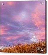 Soft Diffused Colourful Sunset Over Dry Grassland Acrylic Print