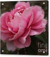 Soft Focus Pink Acrylic Print