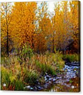 Soft Forest Colors Acrylic Print