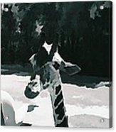 Soft Giraffe Acrylic Print