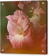 Soft Gladiolus Acrylic Print