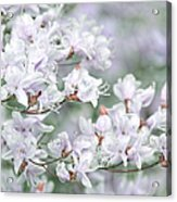 Soft Lavender Dancing Azalea Flowers Acrylic Print