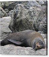Soft Life Seal Acrylic Print