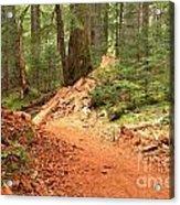 Soft Light Along The Cheakamus Lake Trail Acrylic Print