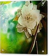 Soft Light Acrylic Print