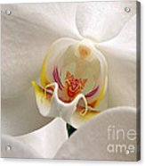 Soft Orchid Acrylic Print