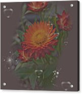Soft Pastel Abstract Strawflowers Art Prints Acrylic Print