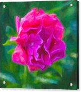 Soft Pink Peony Acrylic Print