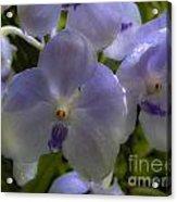 Soft Purple Orchids Acrylic Print