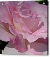 Soft Shade Of Pink Acrylic Print