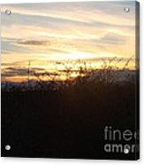 Soft Skies Acrylic Print