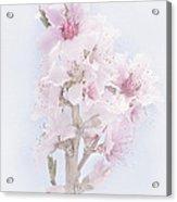 Soft Spring Acrylic Print