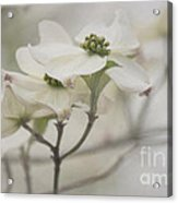 Soft Texture Of Spring Acrylic Print