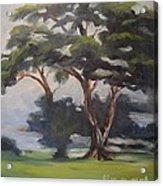 Soft Trees Acrylic Print