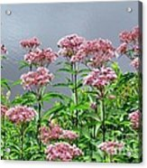 Softest Pink Acrylic Print
