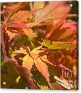 Softly Autumn Acrylic Print