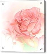 Softly Pink Acrylic Print
