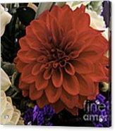 Softly Red Acrylic Print