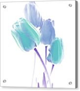 Softness Of  Blue And Teal Tulip Flowers Acrylic Print