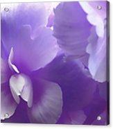 Softness Of Purple Begonias Acrylic Print
