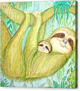 Soggy Mossy Sloth Acrylic Print by Nick Gustafson