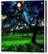 Solar-oak Eclipse Acrylic Print