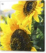Solar Sunflowers Acrylic Print