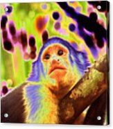 Solarized White-faced Monkey Acrylic Print