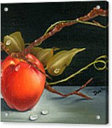Solitary Apples Acrylic Print