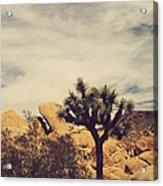 Solitary Man Acrylic Print by Laurie Search