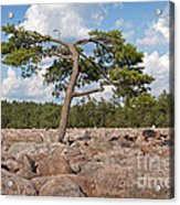 Solitary Tree Amidst Field Of Boulders Acrylic Print