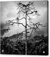 Solitary Tree Acrylic Print